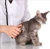 Ветеринарные клиники в Нюксенице